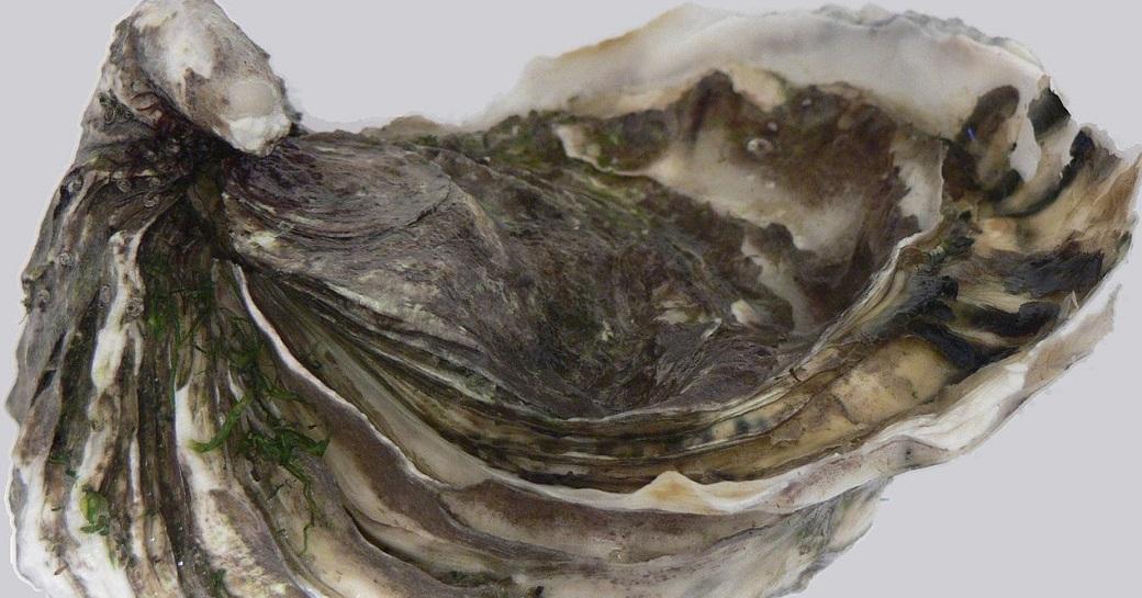 Miyagi Raw Oysters