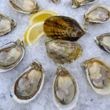 shigoku-oysters